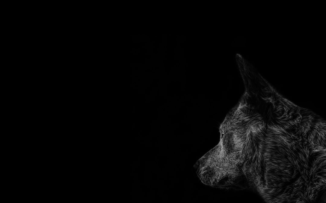 Three Hurdles in the Fight With the Black Dog of Depression