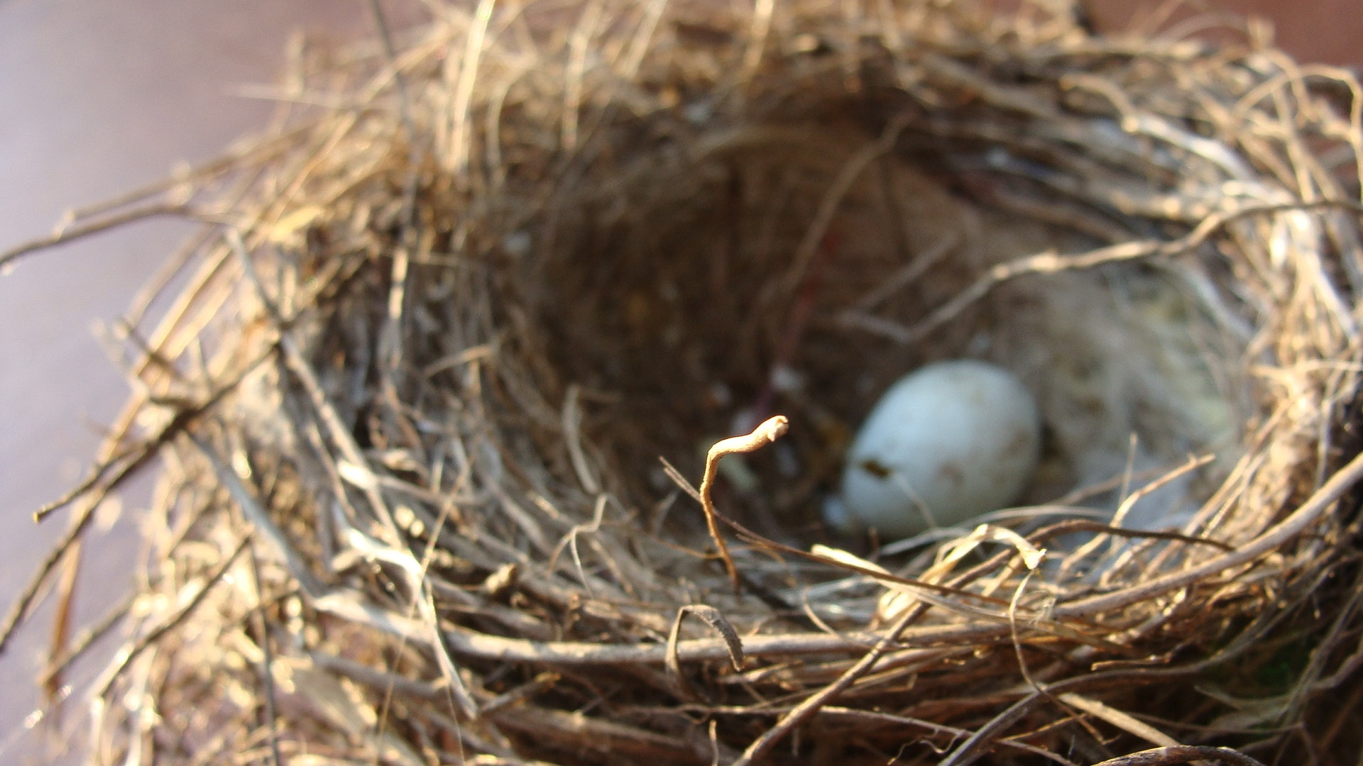 How To Not Be Victimized By Empty Nest. Letting Go With Intention.